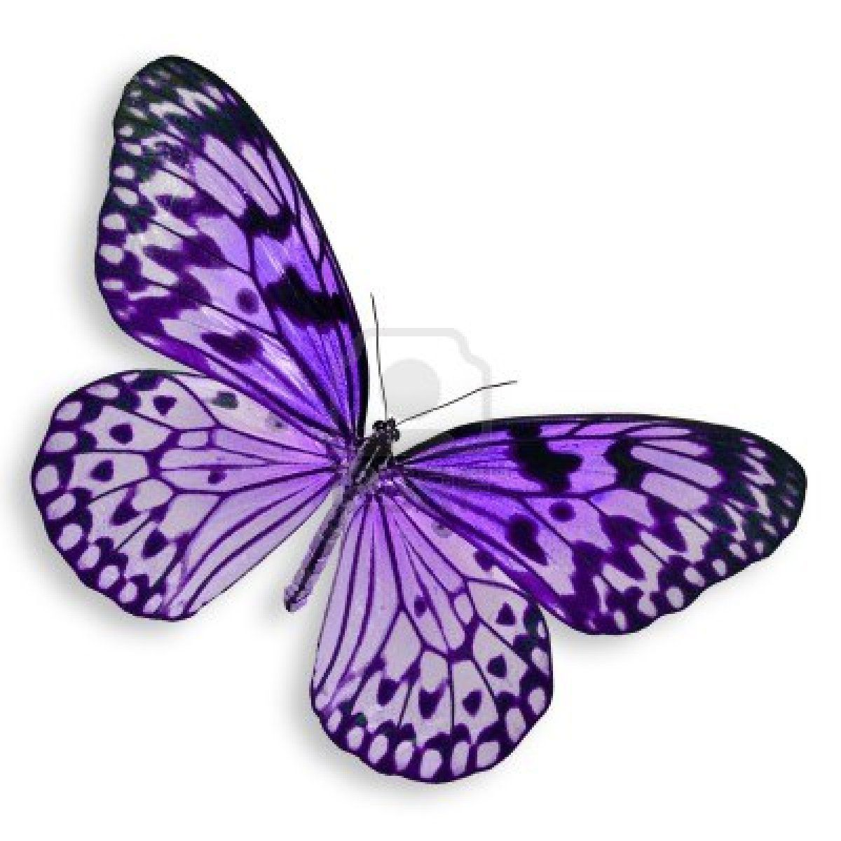 1200x1200 stock photo get inked purple butterfly tattoo, butterfly