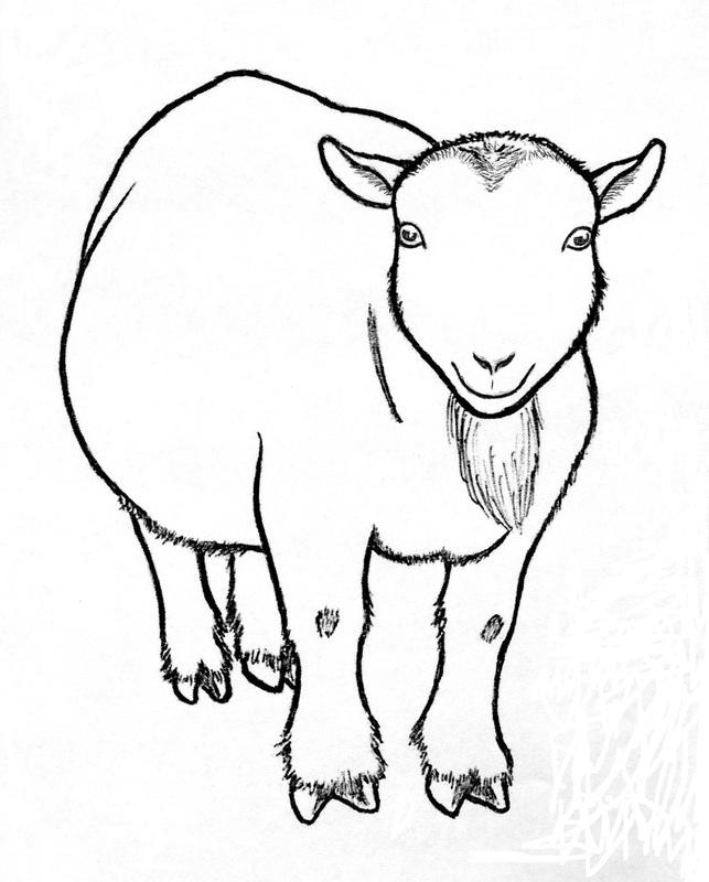 Pygmy Goat Drawing