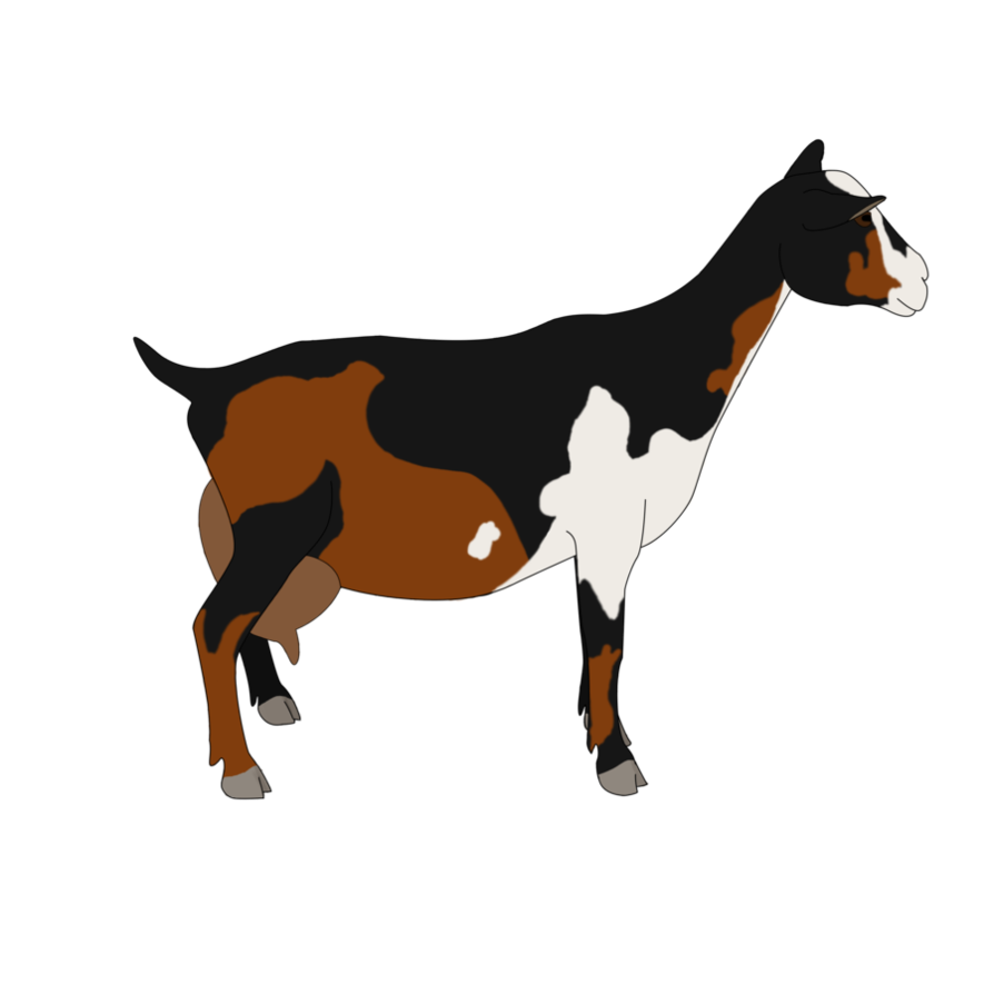 894x894 Collection Of Free Goat Drawing Nigerian Dwarf Download On Ui Ex