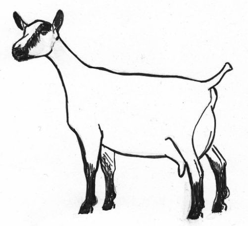 501x457 Drawing Goats, Drawing Tutorials And Snow White Art