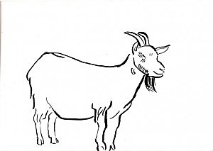 300x213 Fugitive Goat On The Loose