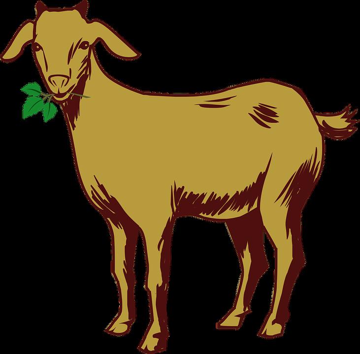 731x720 Goat Drawing