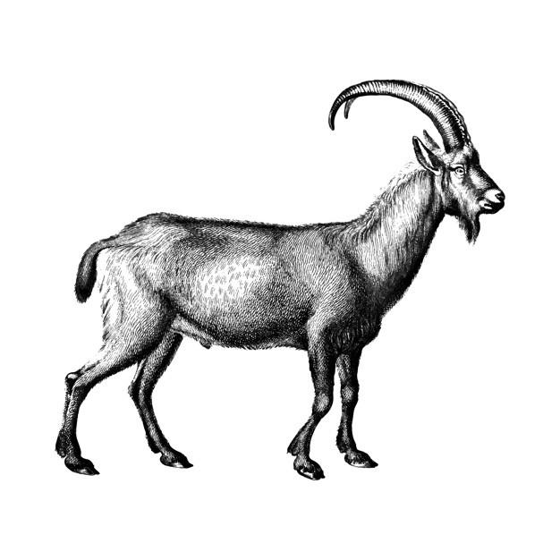 626x626 Goat Vectors, Photos And Free Download