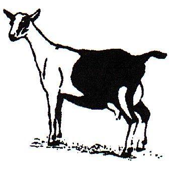 342x336 Goat Alpine Goat Fun Pics Images