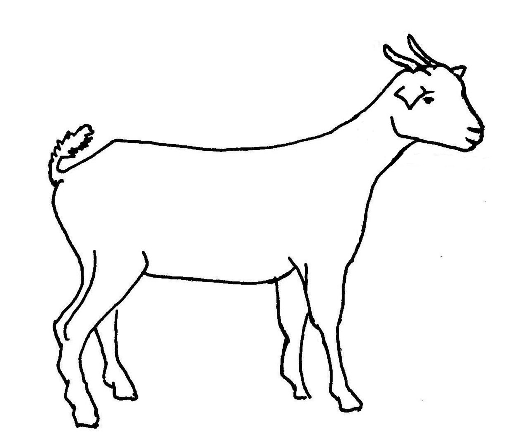 1024x876 Goat Drawing Sketch For Free Download