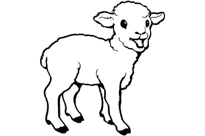 720x480 Goat Drawing Tiny For Free Download