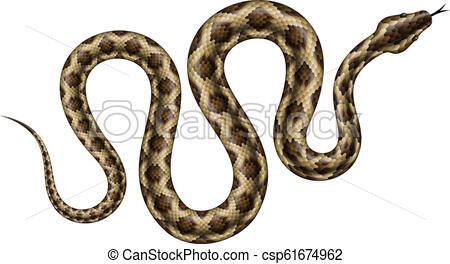 450x264 python vector illustration brown python vector illustration