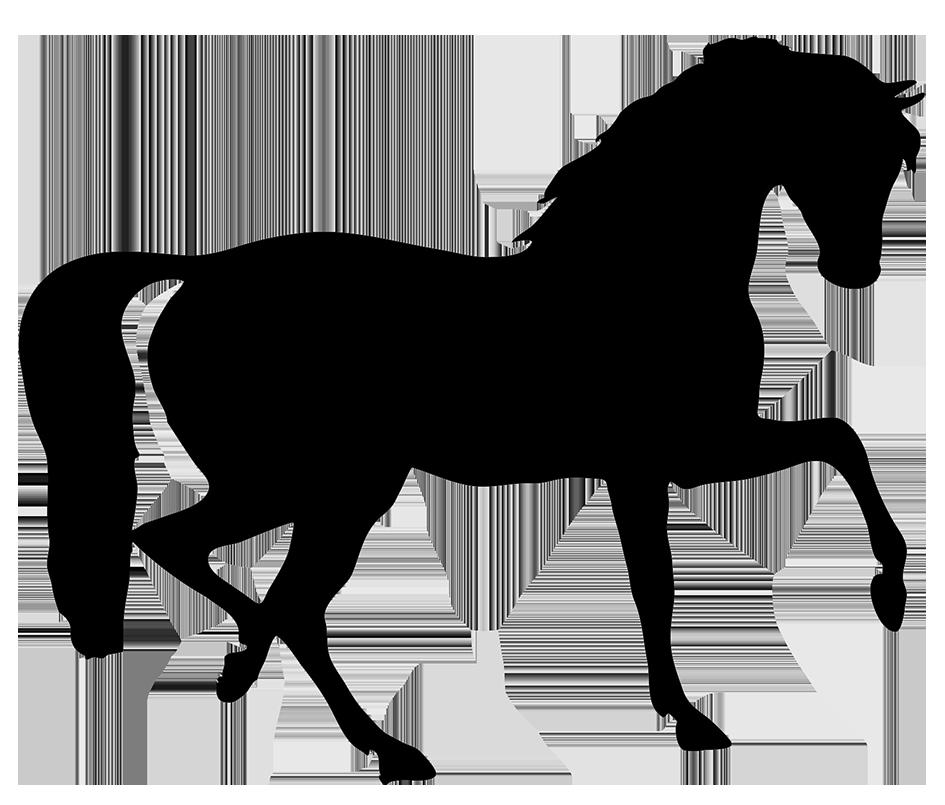 Quarter Horse Drawing