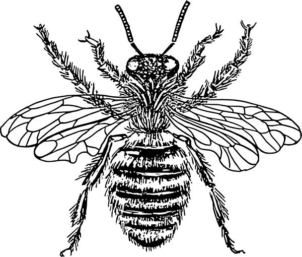600x510 Bee Queen Clip Art Free Vector In Open Office Drawing