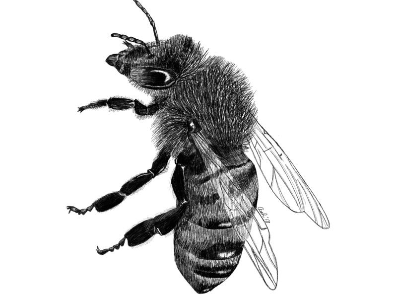 800x600 Queen Bee