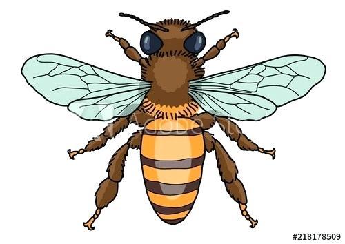 500x354 Bee Cartoon Drawing