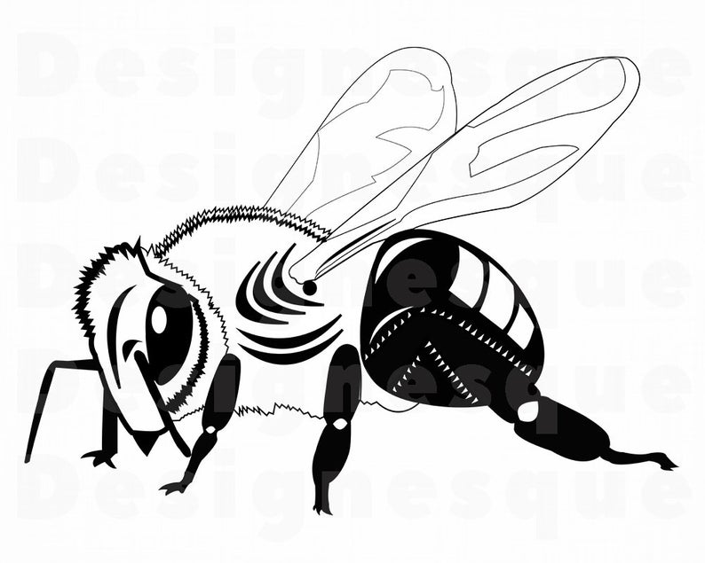 794x635 bee bee queen bee honey bee clipart etsy