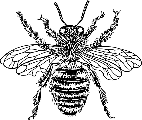 600x510 Bee Queen Drawing Clip Art
