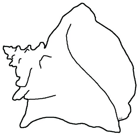 474x463 How To Draw A Conch Shell