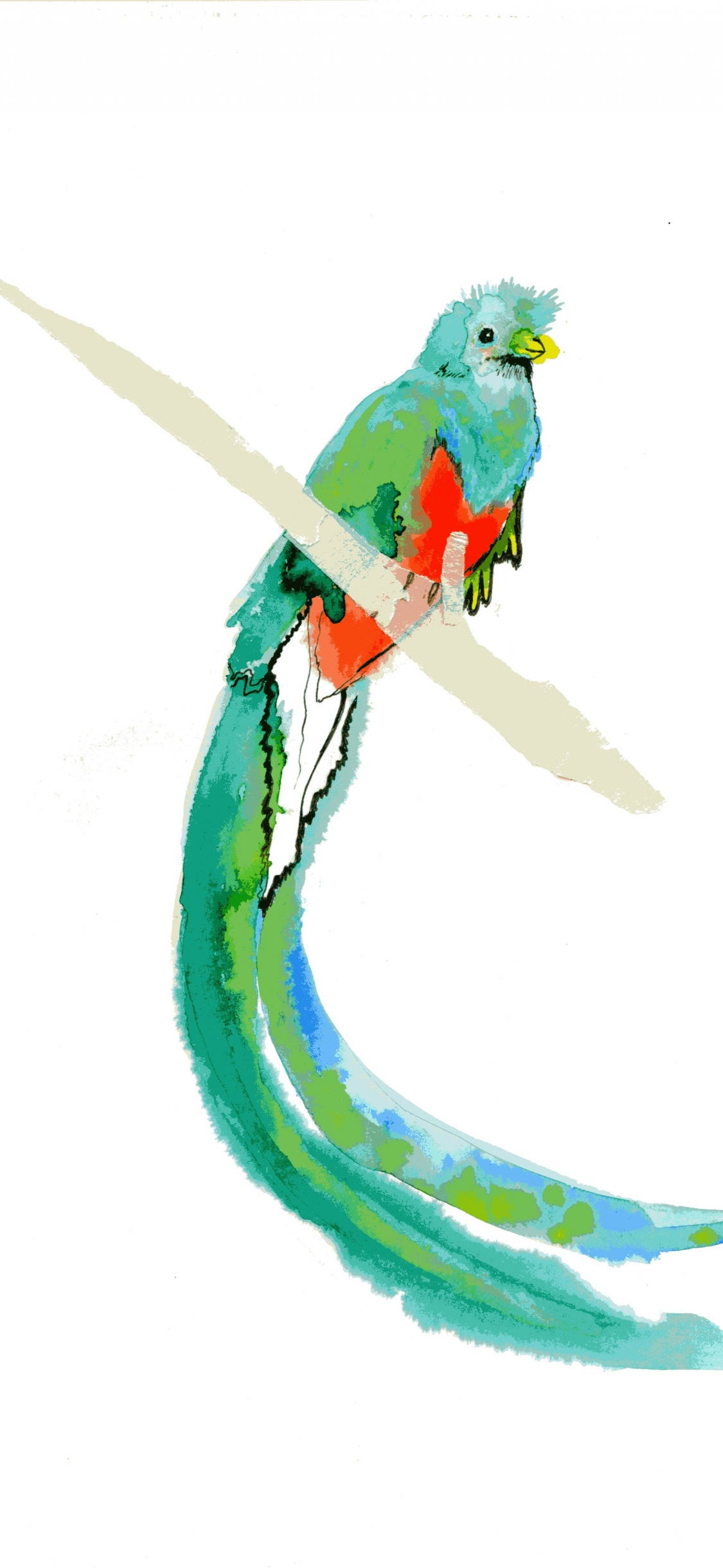 Quetzal Bird Drawing
