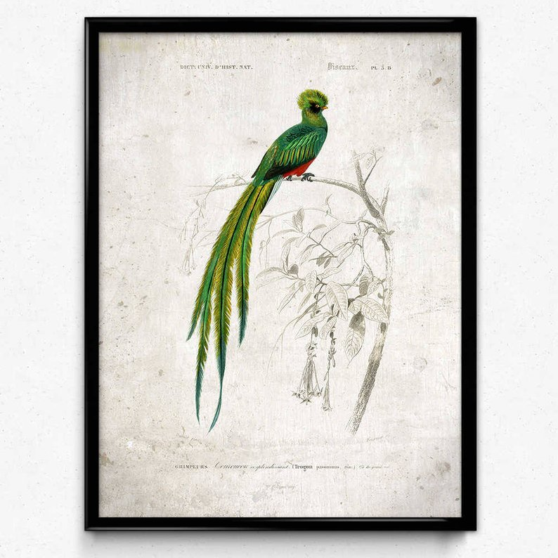 794x794 quetzal bird vintage print bird poster bird art bird etsy