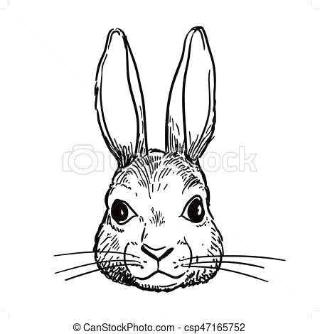 450x470 rabbit drawings rabbit drawing peter rabbit drawing easy