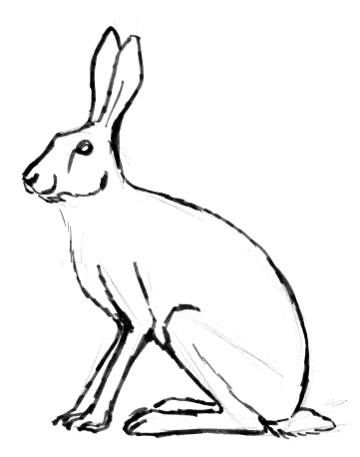 360x457 hare picture bunnies hares hare illustration, hare pictures
