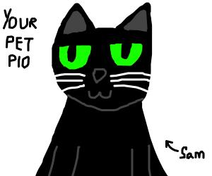300x250 Draw Your Pets Pio