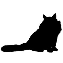 240x240 Search Photos Ragdoll Cat