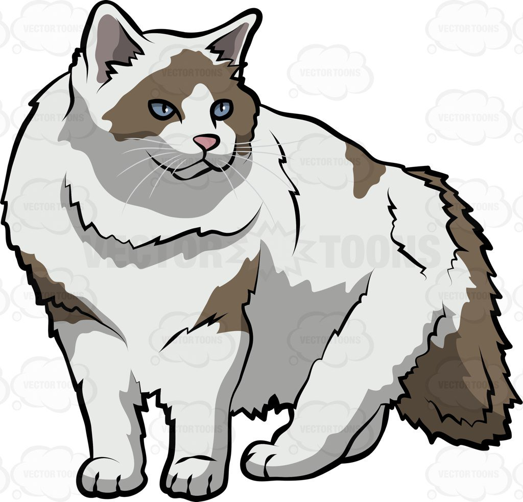 1024x983 Collection Of Free Kitten Clipart Ragdoll Cat Amusement Clipart