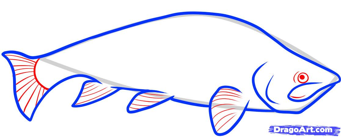 1116x450 draw a trout, trout fish, step