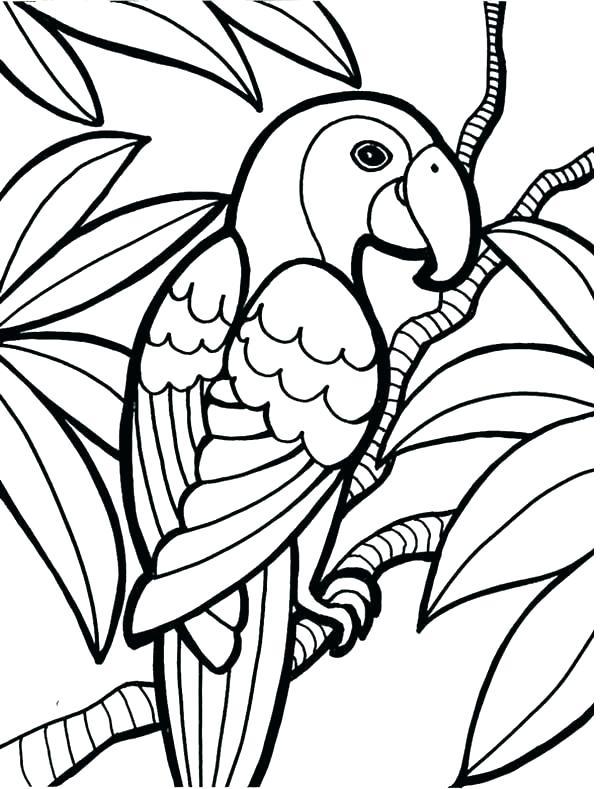 Rainforest Animals Drawings   Free download best Rainforest ...