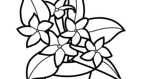 585x329 rainforest plants coloring pages tropical plants coloring pages
