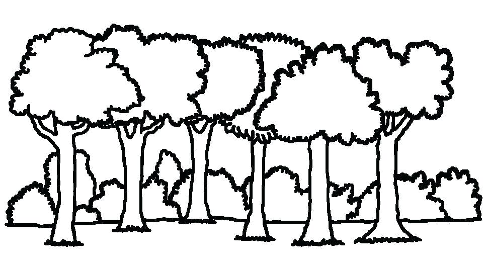 962x535 how to draw rainforest trees tropical drawing draw rainforest