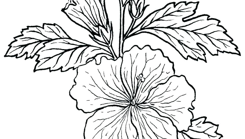 960x544 rainforest plants coloring pages tropical rainforest plants