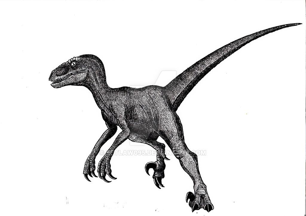 1024x724 velociraptor drawing carnivorous dinosaur for free download