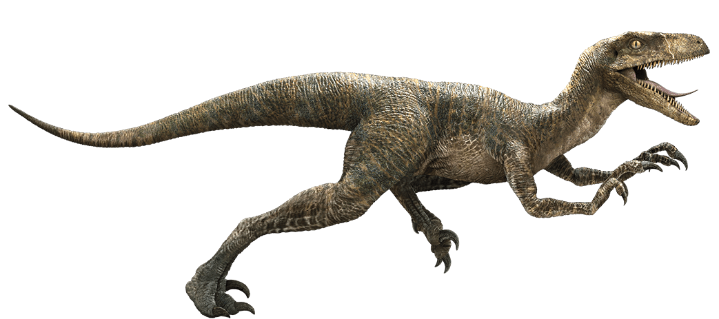 1043x463 velociraptor