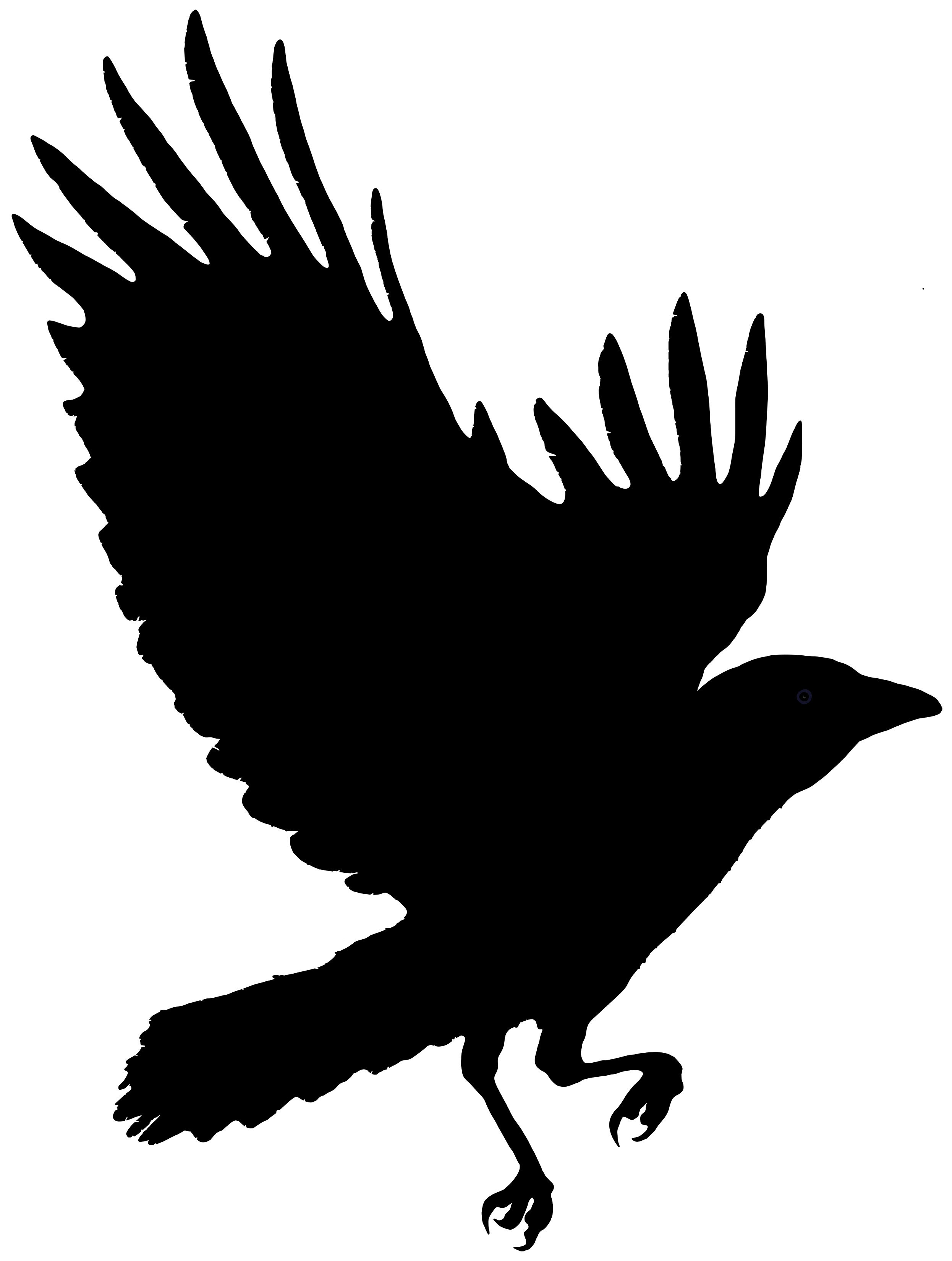 2492x3300 Raven Feather Clipart