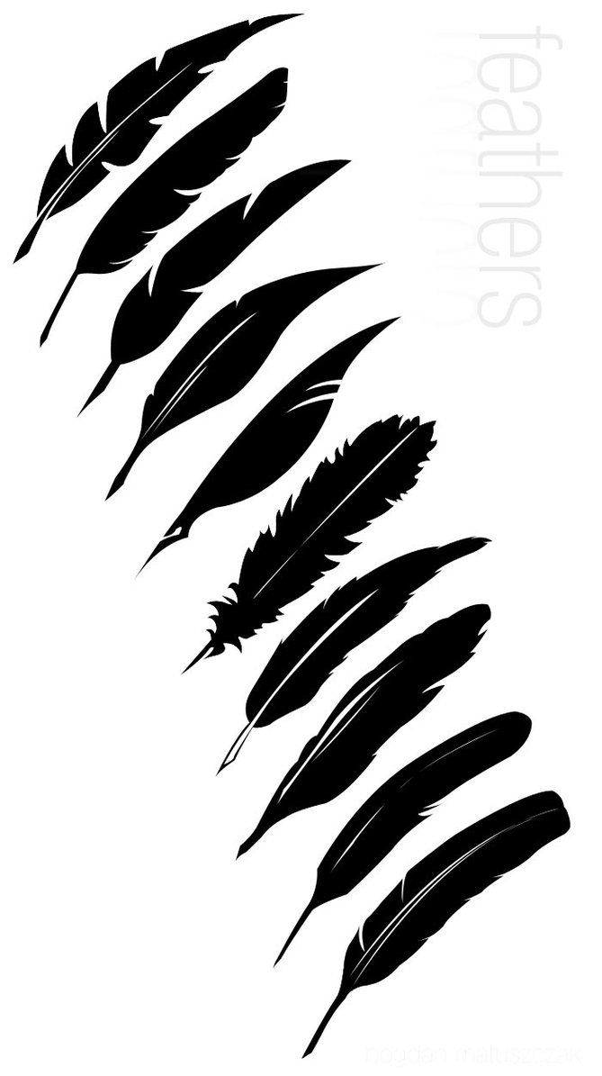 669x1195 Several Types Of Vector Feathers I've Made Hurrah! Feathers! Edit