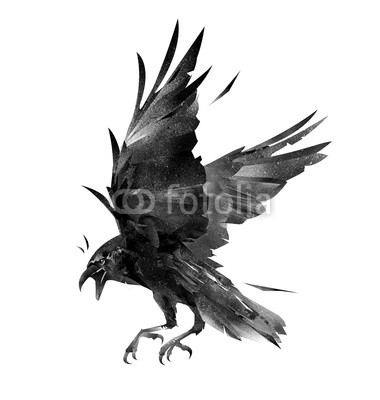 380x400 Drawing Flying Bird Crow On A White Background Buy Photos Ap