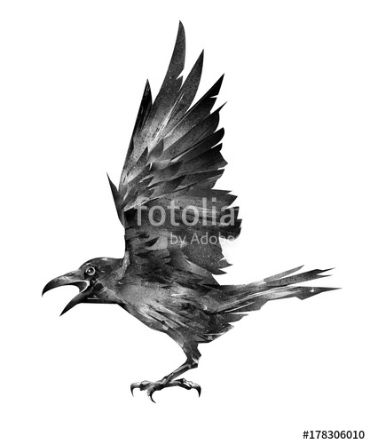 417x500 Drawn Flying Bird Raven On A White Background Stock Photo
