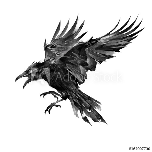 500x500 Drawn Flying Bird On White Background Side View