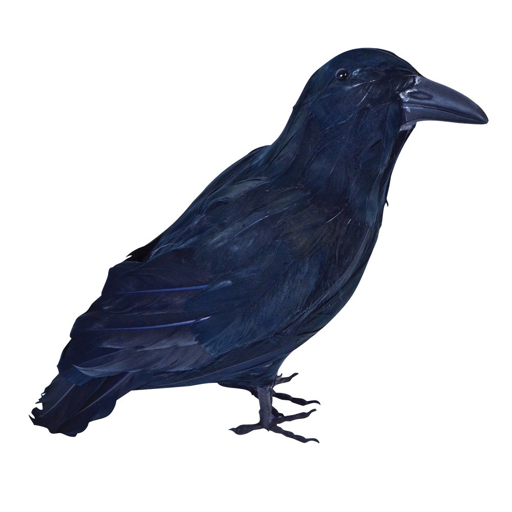 1000x1000 Black Bird Raven Realistic Feather Crow