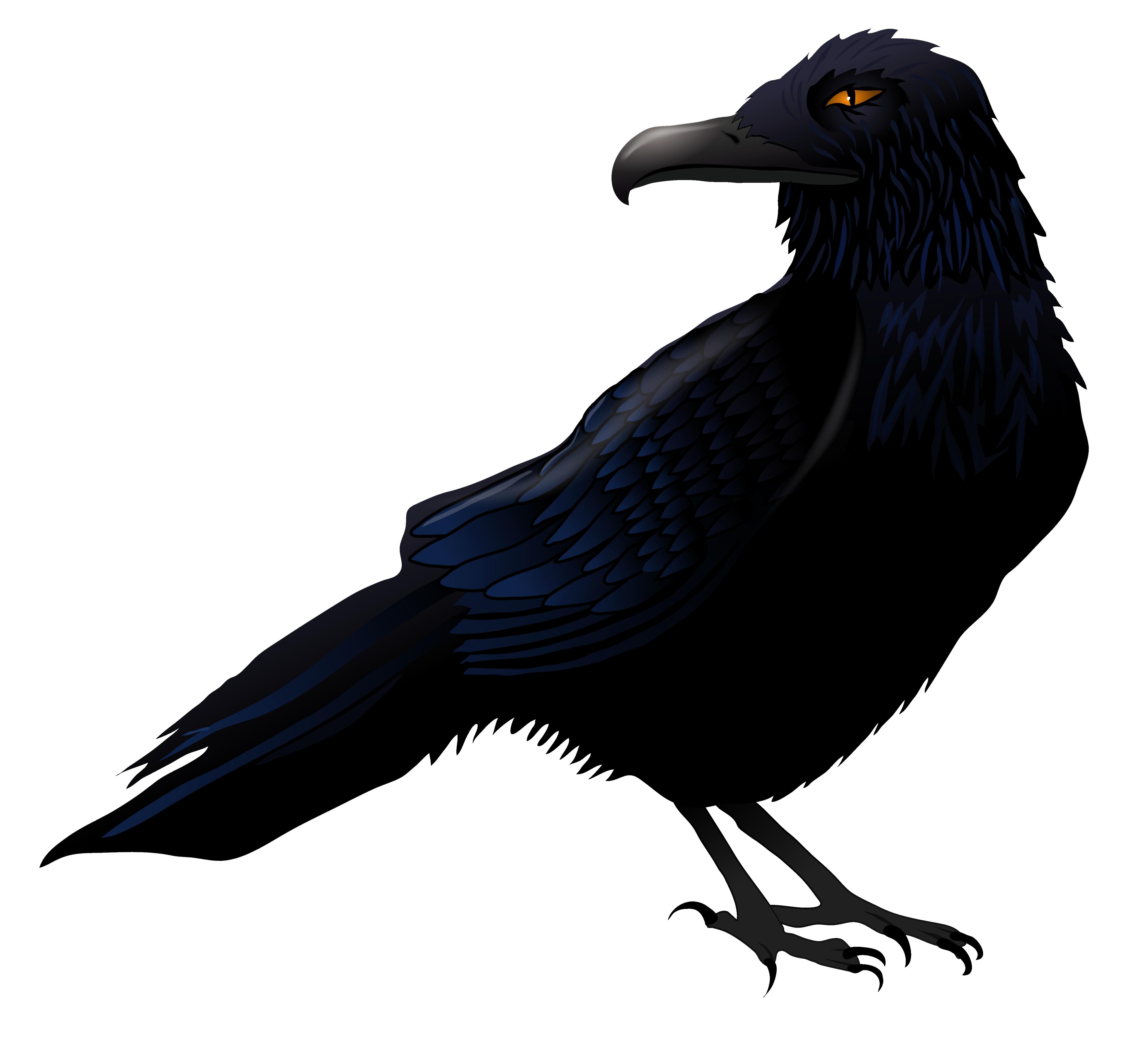 Raven In Flight Drawing