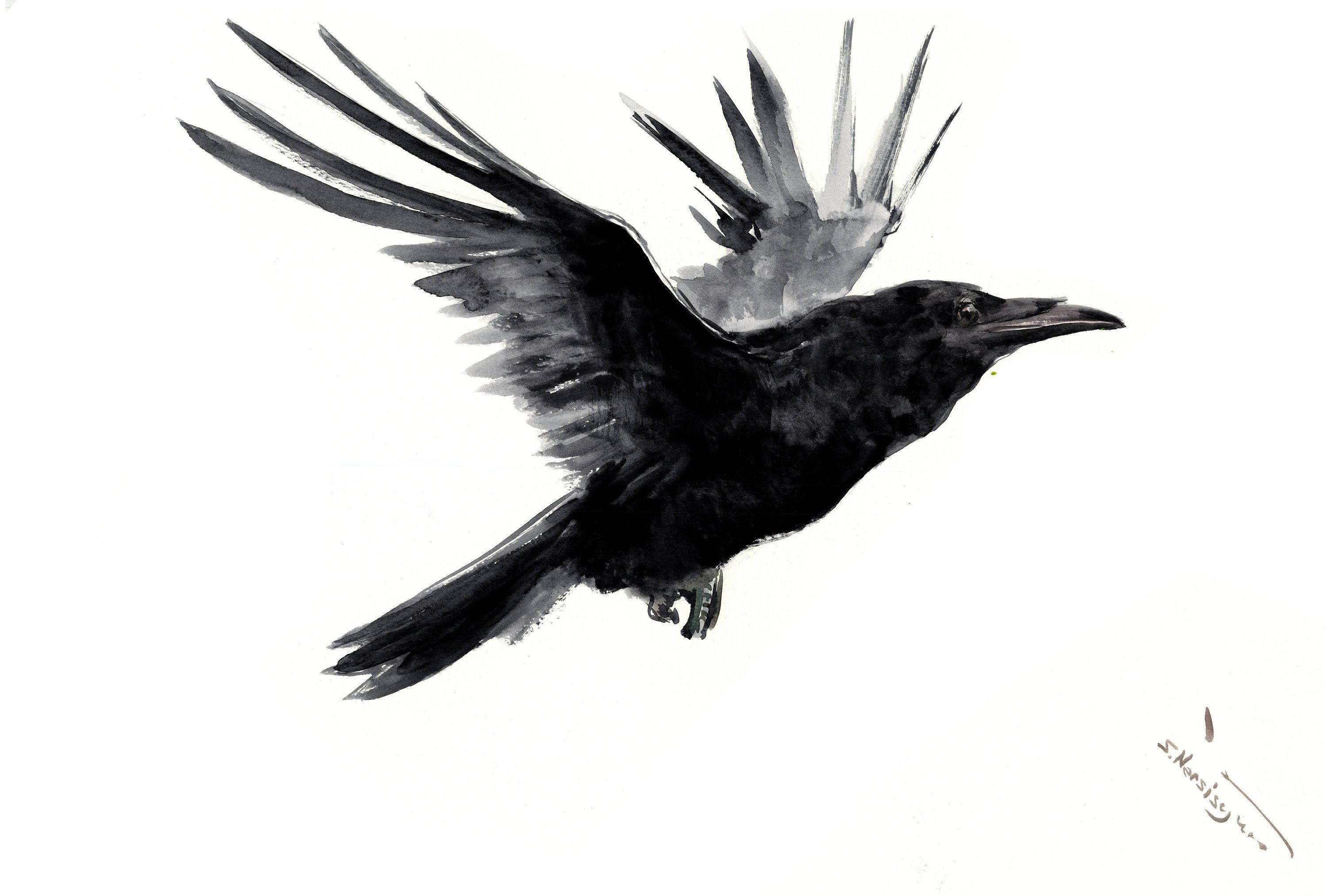 3000x2027 flying raven artwork black and white art raven, original