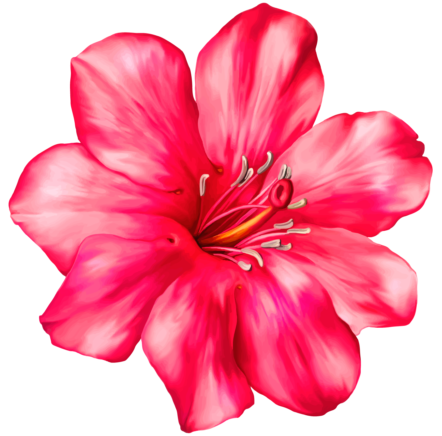 1414x1393 Collection Of Free Hibiscus Drawing Realistic Download On Ui Ex