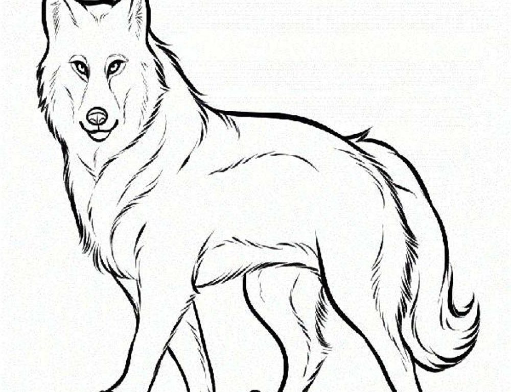 1000x768 Fresh Wolf Coloring