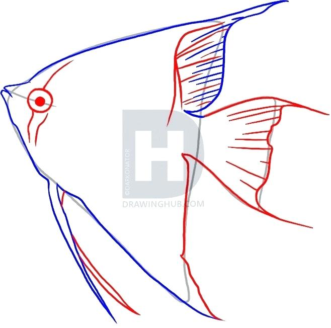 658x652 How To Draw A Angel Fish Completing The Graphite Drawing Draw