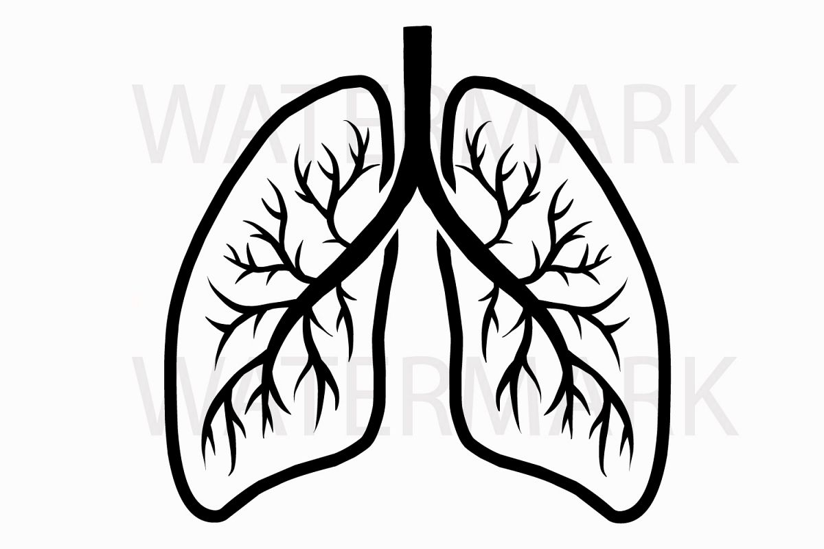 1200x800 Lungs Drawing Realistic For Free Download