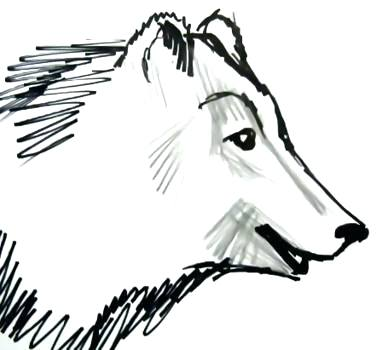 382x350 How To Draw A Bear Face How To Draw A Realistic Bear Step How