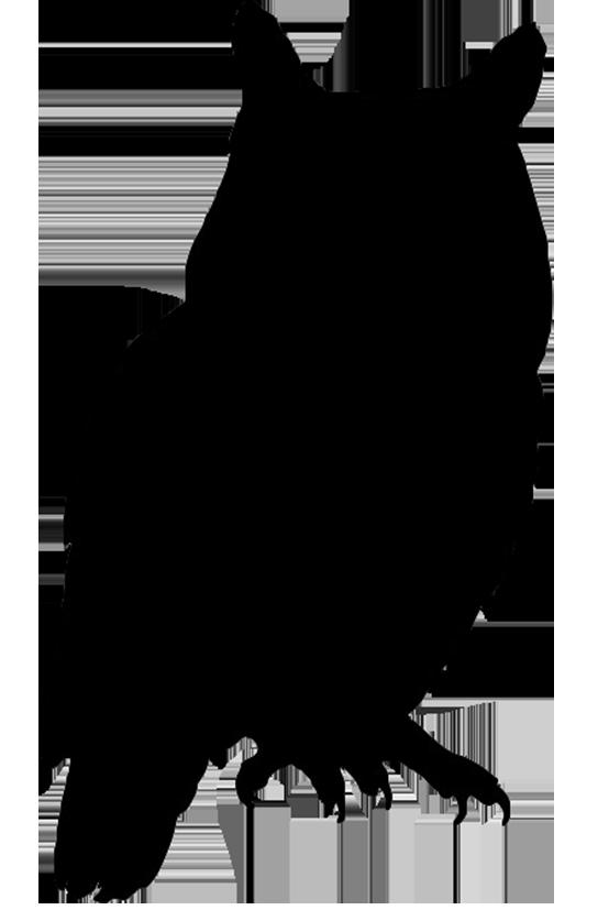 554x827 Drawing Hawks Realistic Hawk Transparent Png Clipart Free