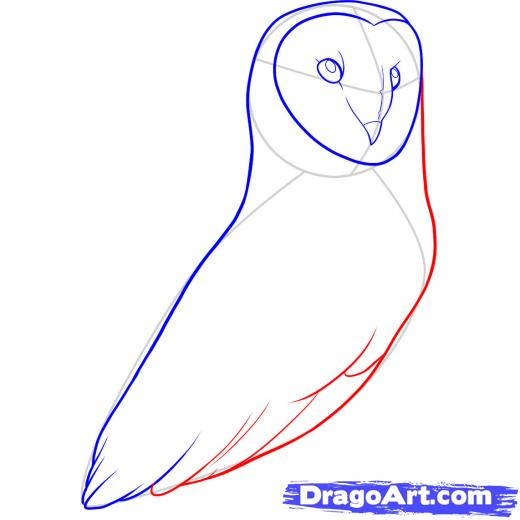 520x520 Step How To Draw A Barn Owl