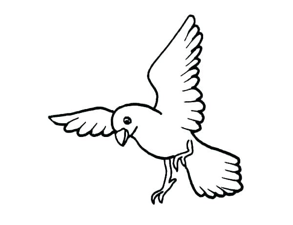 600x460 Free Realistic Bird Coloring Pages Birds