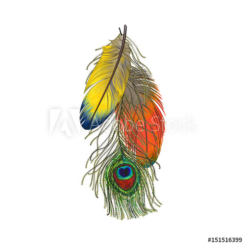 500x500 Hand Drawn Set Of Colorful Bird Feathers, Parrots And Peacock