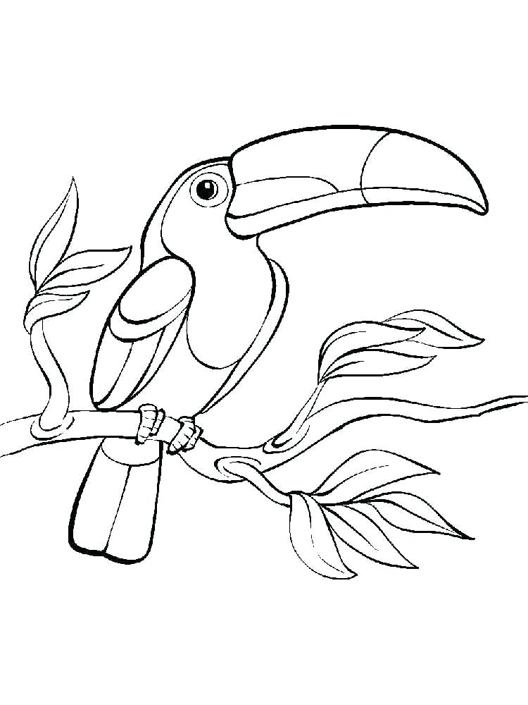750x1000 How To Draw A Toucan Step